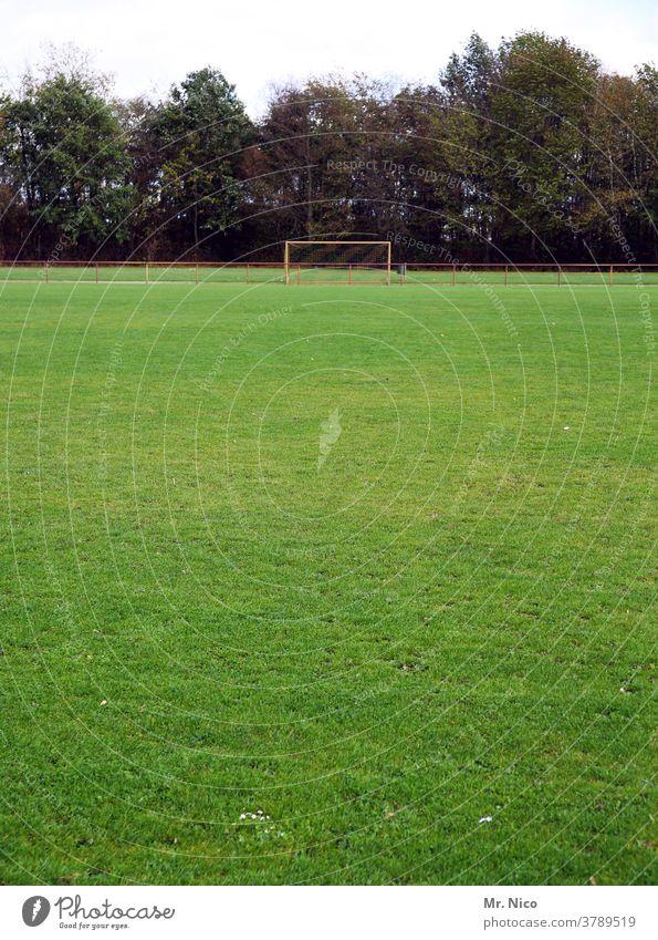 grüne Wiese mit Fußballtor im Hintergrund Sportplatz Fußballplatz Rasen Gras Spielfeld Sportrasen Sportstätten Freizeit & Hobby Wäldchen Ballsport