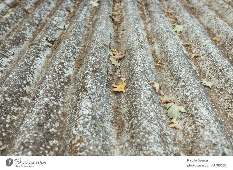 Schmutziger Dachziegel mit Blättern Herbst herbstlich Herbstlaub fallen dreckig Sauberkeit Reinigen Textfreiraum oben Tag Menschenleer Außenaufnahme