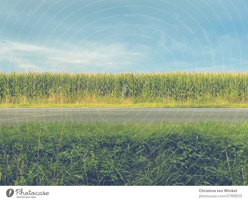 Blick über eine Landstraße mit Grün im Vordergrund, dann Asphalt, ein Maisfeld und darüber blauer Himmel mit einigen Schleierwolken Straße Graben Landschaft