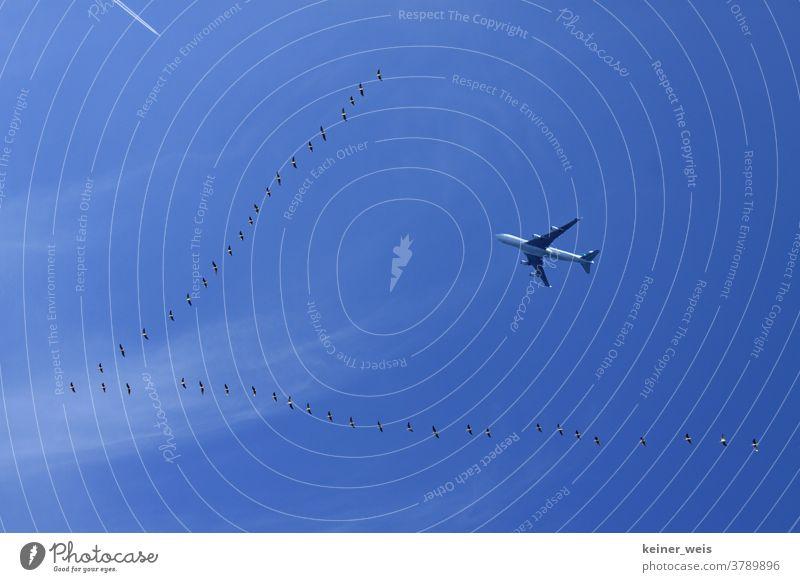 Reisefieber und Flugverkehr - Vogelschwarm und ein Flugzeug am blauen Himmel Flugreise Fernreise Ferien & Urlaub & Reisen Außenaufnahme Tourismus Luftverkehr