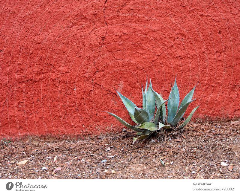Agave vor zinnoberroter Wand wand Pflanze mediterran karg