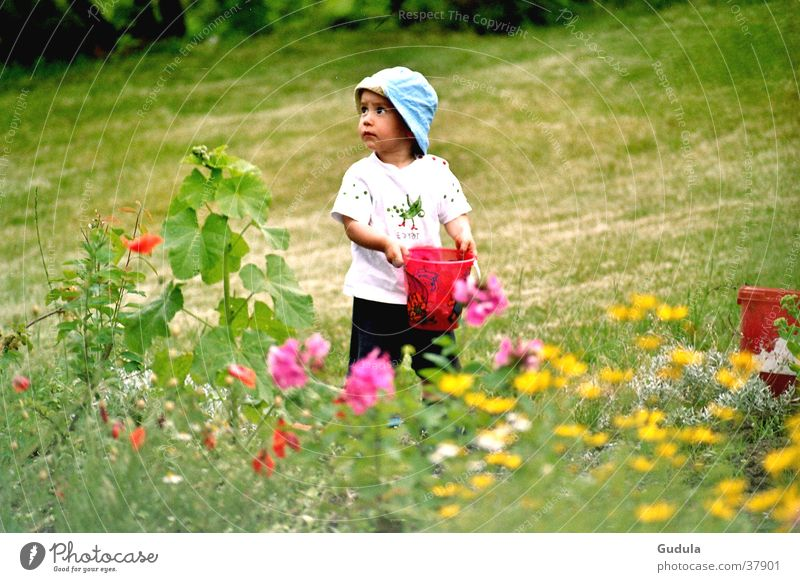 Blumenwiese Kind Mann grün Sommer Junge Wiese träumen Wärme Physik