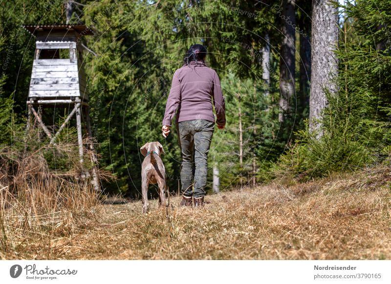 Weimaraner Jagdhund während der Ausbildung im Wald weimaraner frau person wald vorstehhund wandern unterwegs jagdausbildung gehorsam lernen zopf haare jäger