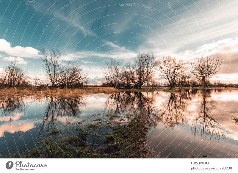 Die Wiesen stehen Kopf in der Spiegelung des Regenwassers Reflexion Reflexion & Spiegelung Himmel Wolken überschwemmt überschwemmtes Feld Baum Wasser Landschaft