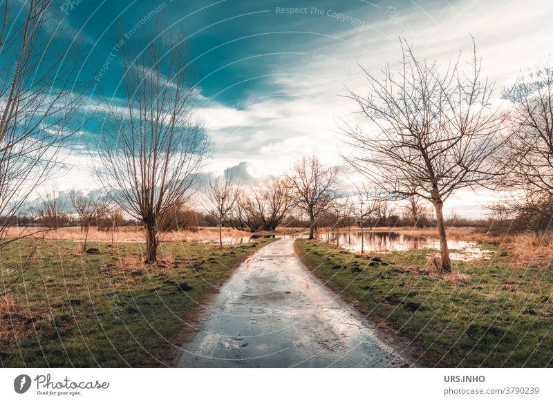 Weg durch die überschwemmte Wiese Spiegelung Reflexion Reflexion & Spiegelung Himmel Wolken überschwemmtes Feld Baum Wasser Landschaft Farbfoto Überschwemmung
