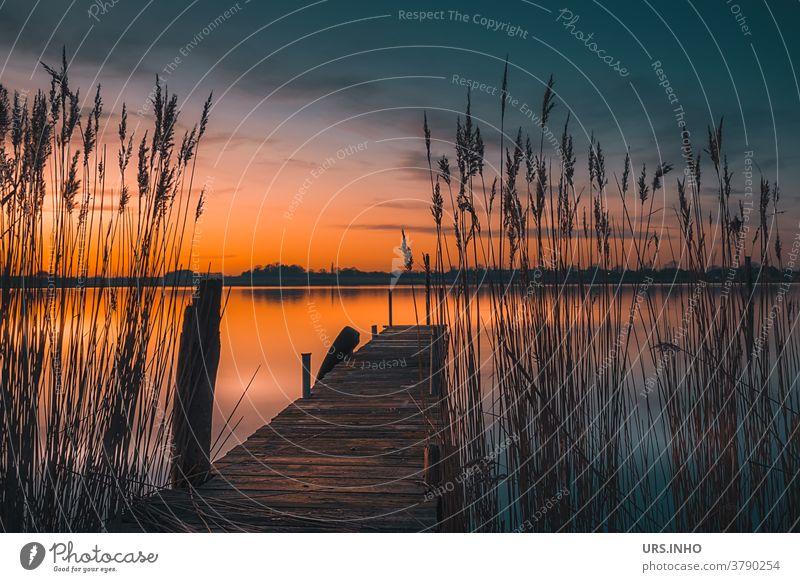 Steg aus Holz am Ufer der Schlei lädt zum Baden in der Abendsonne ein Schleswig-Holstein Sonnenuntergang Schilf Idylle See Fluss Wasser Natur Himmel Landschaft