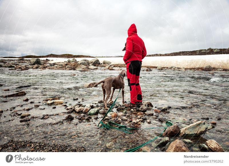 Wanderung mit Hund im Hochgebirge hund weimaraner frau person fluss hochgebirge schnee winter vorstehhund wandern unterwegs ausbildung jagd welpe junghund fell