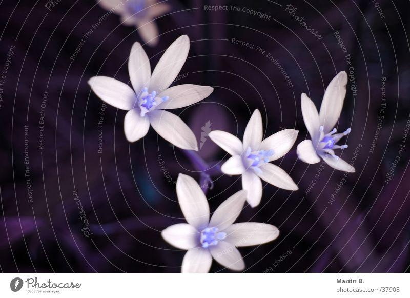 Blütenzauber weiß Blume Pflanze Blatt Sträucher Hecke