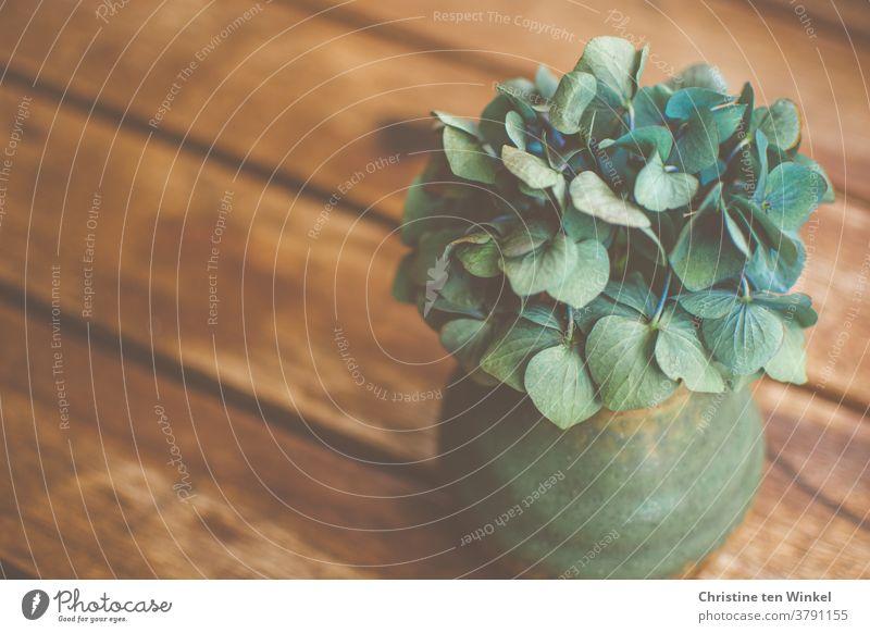Eine kleine grüne Vase mit einer fast verblühten blauen Hortensienblüte steht auf einem braunen Holztisch Stillleben Blüte Holzhintergrund Vergänglichkeit Blume
