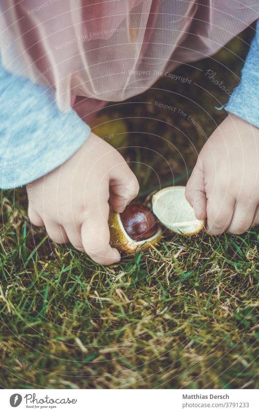 Mädchen sammelt Kastanien Kastanienbaum Hände Kinderhände scheffeln Herbst Herbstgefühle Herbstlandschaft