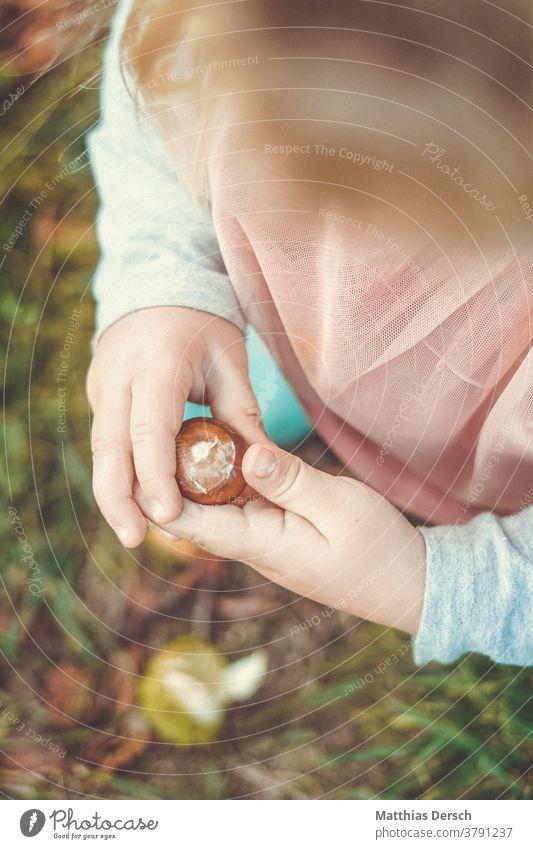 Mädchen beim Kastaniensammeln Kastanienbaum Hände Kinderhände Herbst Herbstgefühle Herbstlandschaft
