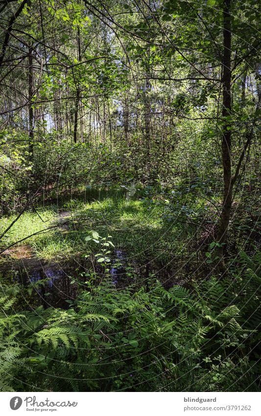 """Welcome to the Jungle. Ein klein wenig """"unberührte"""" Natur (fast) direkt vor der Haustür. Wald Bäume Teich Pfütze Bach Fluss Flora Außenaufnahme Landschaft"""