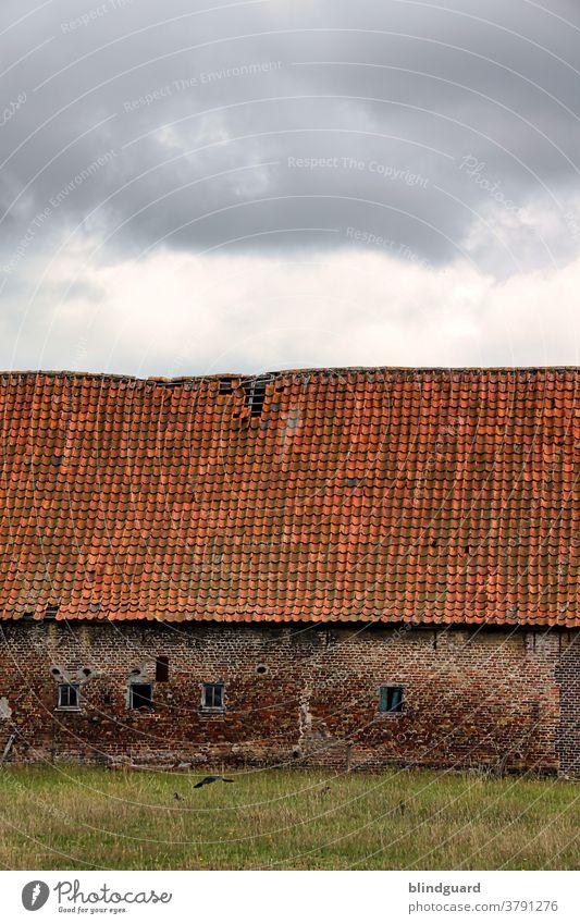 Old McDonald hat ne alte Farm ... Baufälliges, altes Stallgebäude auf einer Weide in der Nähe von Brügge (Belgien) Mauer Dach Haus Bauernhof Hofgut Viehzucht