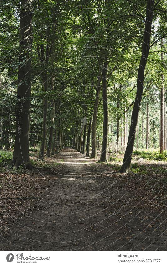 unspektakulär, ruhig und erholsam ... raus aus der Mottenkiste und die Seele baumeln lassen Wald Waldweg Spaziergang Erholung Urlaub Stressabbau Regeneration