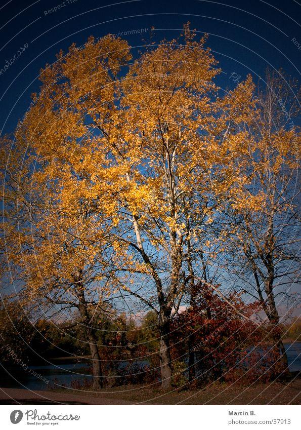 Herbstblätter Baum