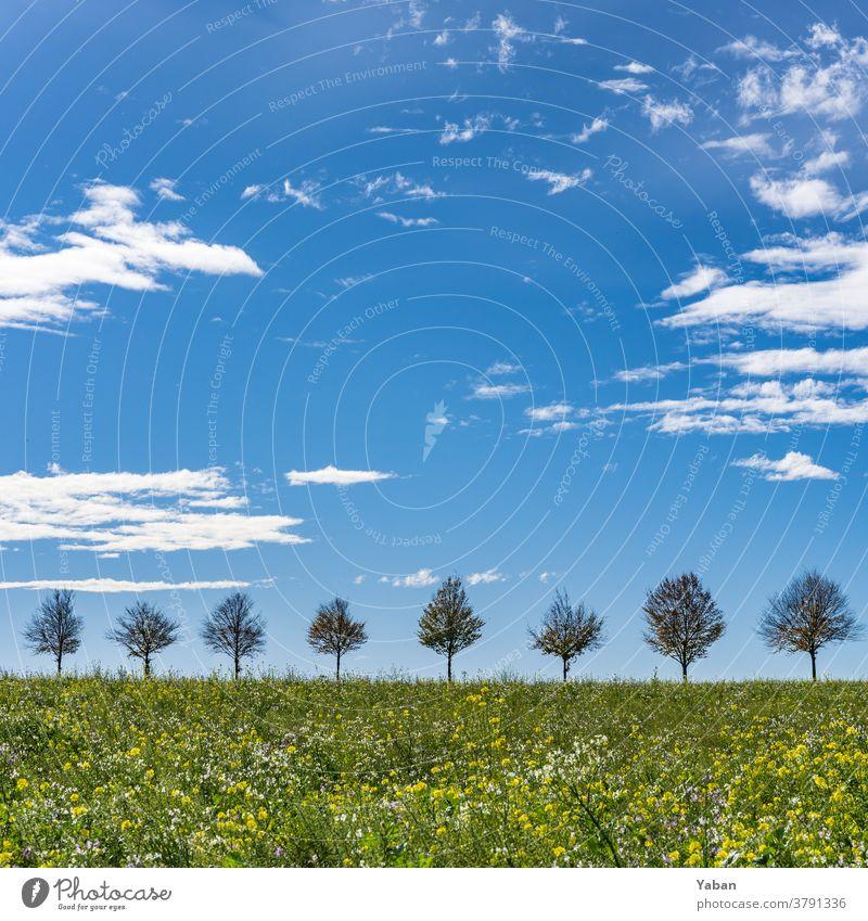 Sonnenallee Baum Himmel Sommer Allee Horizont Farbfoto Blumenwiese Wiese Silhouette