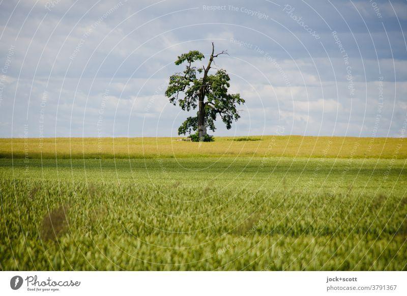 Lebensraum großes Weizenfeld Landschaft Landwirtschaft Wolken Müritz Wachstum authentisch Ferne natürlich Einsamkeit Horizont Inspiration Naturerlebnis