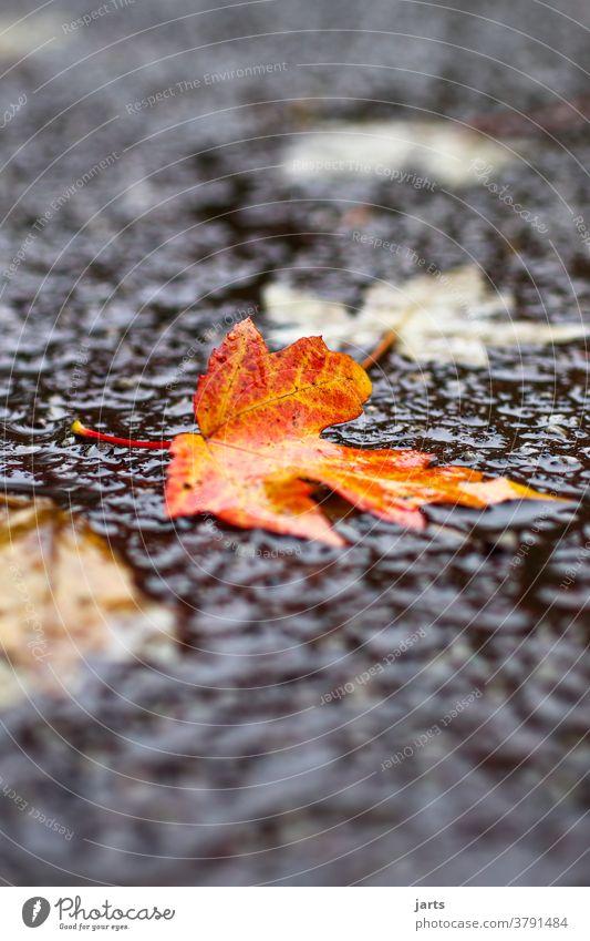 Herbstwetter Regen Wetter Regenwetter Nass Straße Asphalt schlechtes Wetter Wasser Pfütze Reflexion & Spiegelung Außenaufnahme Menschenleer Wege & Pfade feucht