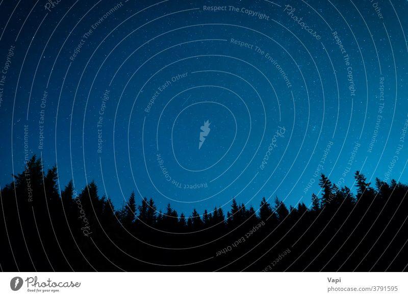 Wald unter Nachthimmel mit Sternen Himmel Baum blau Hintergrund sternenklar dunkel Natur Astronomie Raum Sternbild Schmuckkörbchen Weltall Landschaft milchig