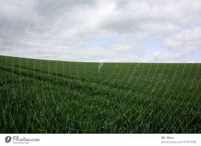 Landwirtschaft Feld grün Getreide Natur Himmel Ackerbau Kornfeld Getreidefeld Nutzpflanze Lebensmittel Wachstum weite Ernährung Pflanze Umwelt ökologisch