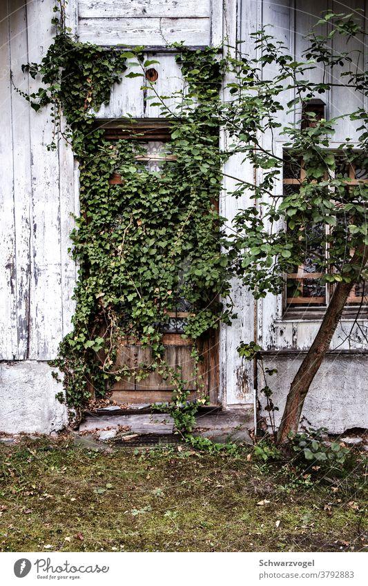Eine zugewachsene Tür Eingang Eingangstür grün Grünpflanze verwildert verwunschen verlassen Verlassenes Haus Natur erobern zurückerobern versperrt