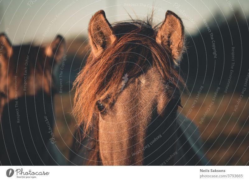 Nahaufnahme des Pferdekopfes Tier braun Kopf Bauernhof Porträt pferdeähnlich Hengst Natur Mähne Säugetier Stute wild Reiterin Auge Gras Ponys Schönheit Himmel