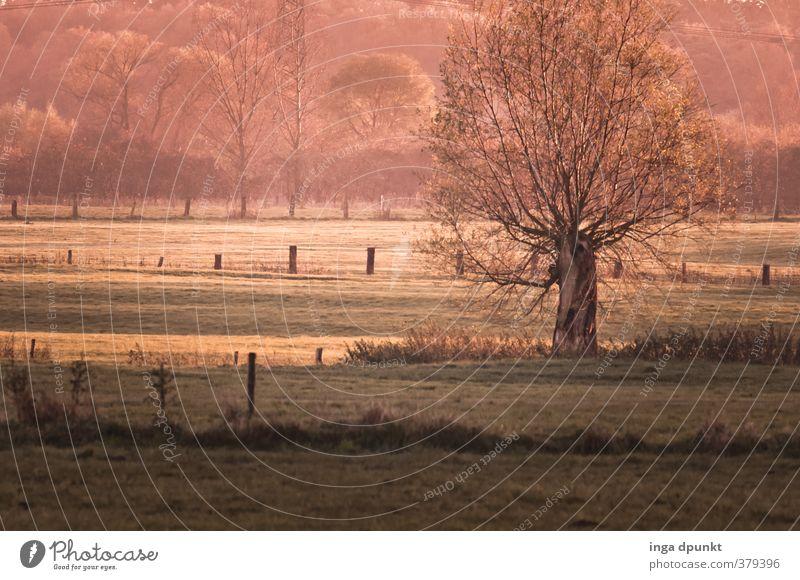 der platte Niederrhein Natur Pflanze Baum Landschaft Winter Umwelt Wiese Gras Frühling natürlich Deutschland Schönes Wetter Kultur Landwirtschaft Jahreszeiten