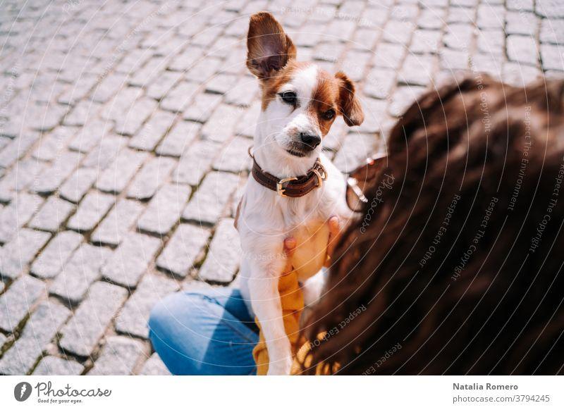 Ein wunderschöner kleiner Hund, der seinen Besitzer genau ansieht. Sie amüsieren sich an einem sonnigen Tag im Park von Madrid. Haustiere im Freien Tier Eckzahn