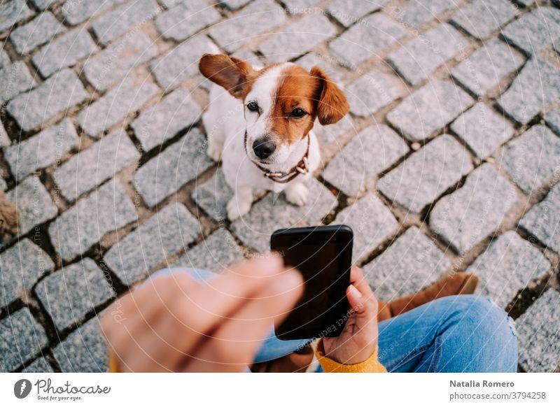 Ein wunderschöner kleiner Hund, der in die Kamera schaut, während sein Besitzer ein Foto von ihm mit dem Telefon macht. Technologie-Lebensstil mit Haustieren