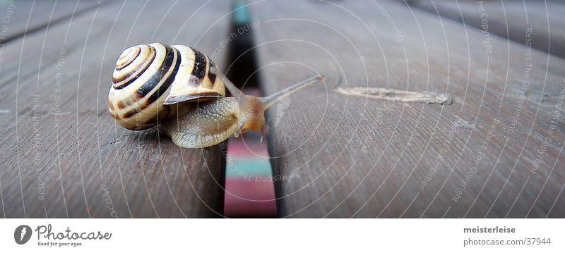Alé Hopp! Tier Schneckenhaus Holz Gartentisch Makroaufnahme Außenaufnahme Schleim kalt Glätte Natur Nahaufnahme