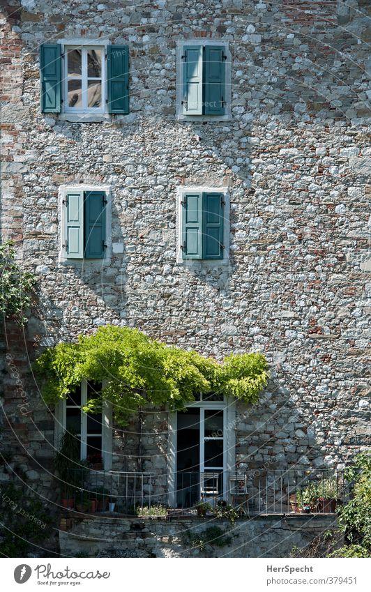 Siesta alt grün schön Pflanze Haus Fenster Wand Architektur Mauer Gebäude grau braun offen Fassade Tür geschlossen