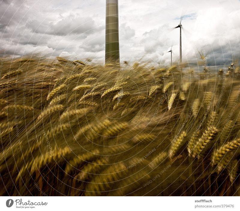 Der Wind, der Wind … Getreide Windkraftanlage Wolken Sommer Sturm Nutzpflanze Feld bedrohlich dunkel groß blau braun grau Bewegung Energie Klima nachhaltig