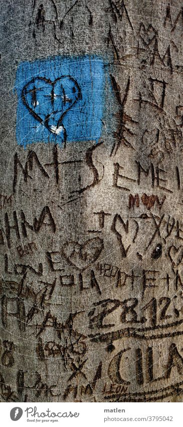 Liebesbaum Baum Rinde Schnitzereien Herz Namen Buchstaben Daten Erinnerungen Unvergänglich bleibend Buche menschenleer mobil