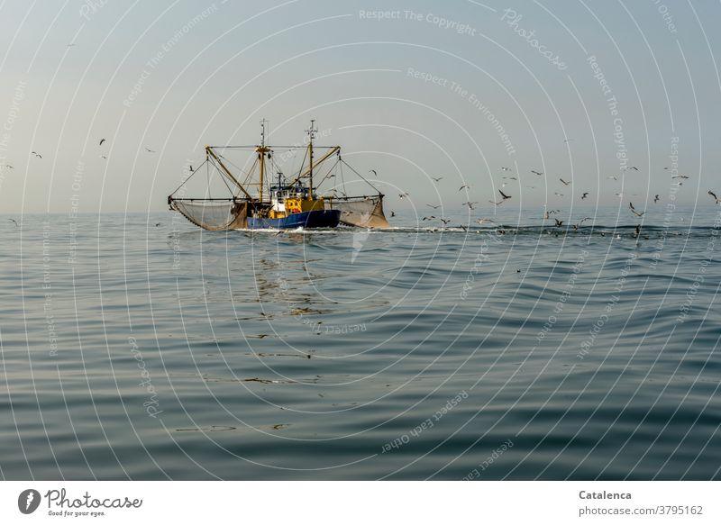 Ein Krabbenkutter auf der Nordsee mit ausgebreiteten Netzen zieht einen Möwenschwarm hinter sich Fischerei Nordseekrabbe Nordseegarnele Tier Nahrungsmittel