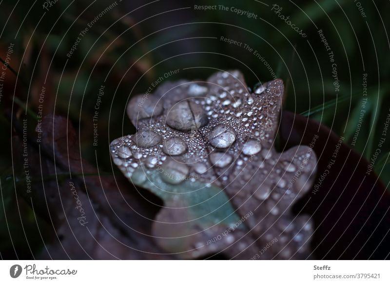 Eichenblatt melancholisch und trist im November Melancholie Novemberstimmung novembermelancholie Novemberblues Tristesse Novemberwetter Regentropfen Tropfen