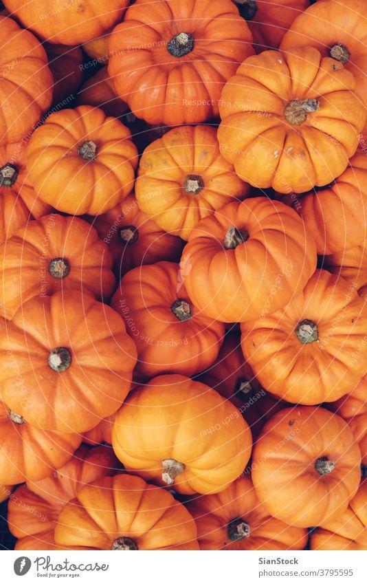 Viele orangefarbene Kürbisse. Halloween-Konzept. weiß Wagenheber Dekoration & Verzierung frisch Herbst reif Hintergrund Lebensmittel Gemüse vereinzelt