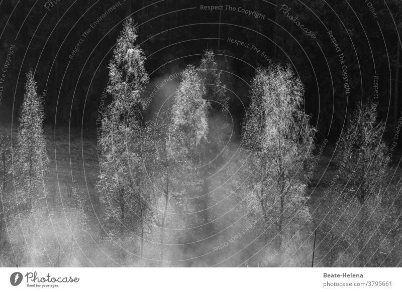 im Eise erstarrt ... Winter eisig kalt gefroren weiß Natur Außenaufnahme frieren Wetter Raureif Bäume Nebel starren Kälte steif Frost Landschaft Winterstimmung