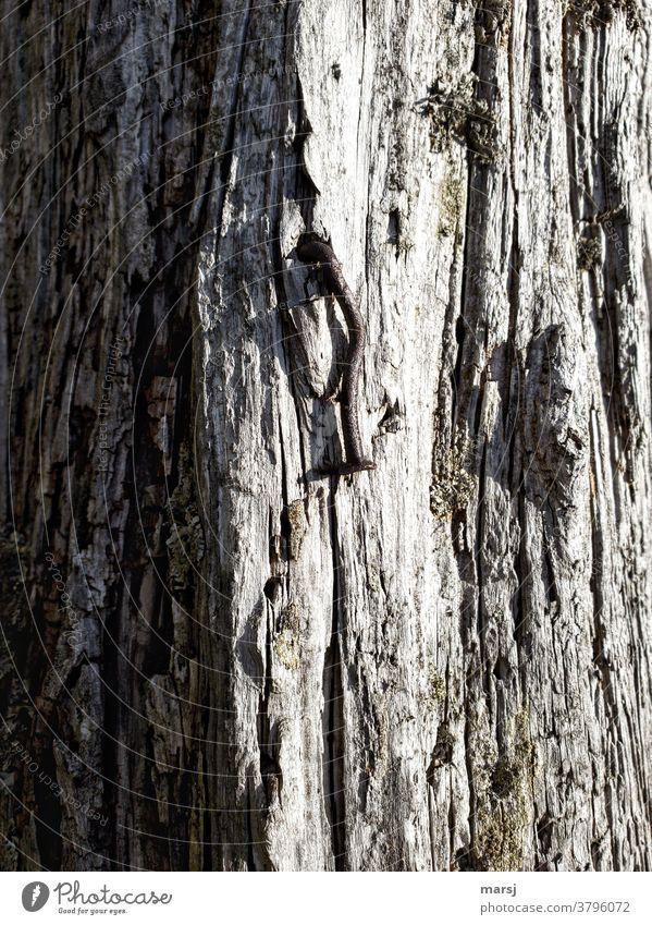 Alter, rostiger und gekrümmter Nagel in einem Stück verwittertem Holz Rost Stahl natürlich braun Traurigkeit alt Metall Holzbrett Einsamkeit Erschöpfung