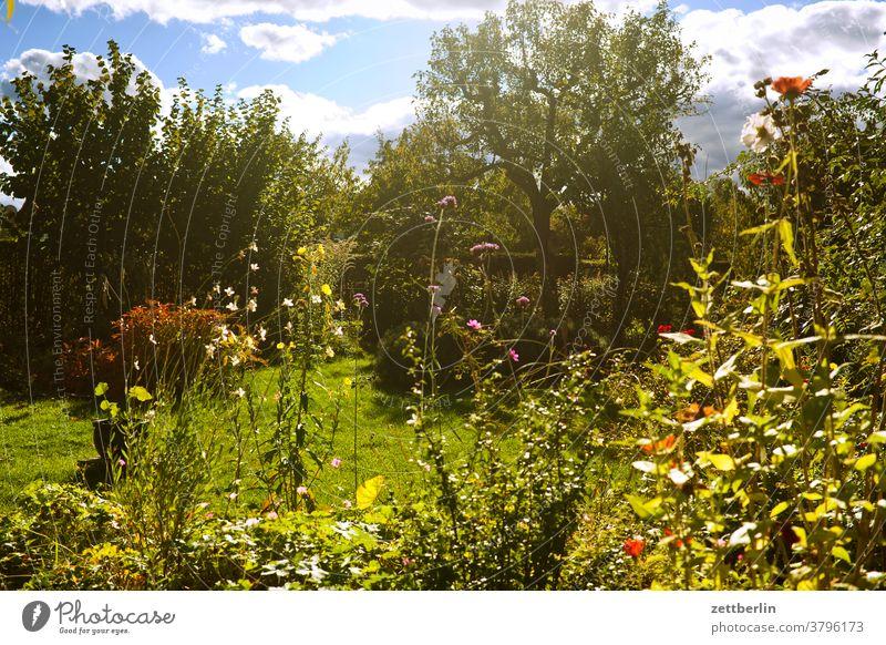 Spätsommer im Garten ast baum blume blühen blüte erholung ferien garten gras herbst himmel kleingarten kleingartenkolonie menschenleer natur pflanze rasen ruhe