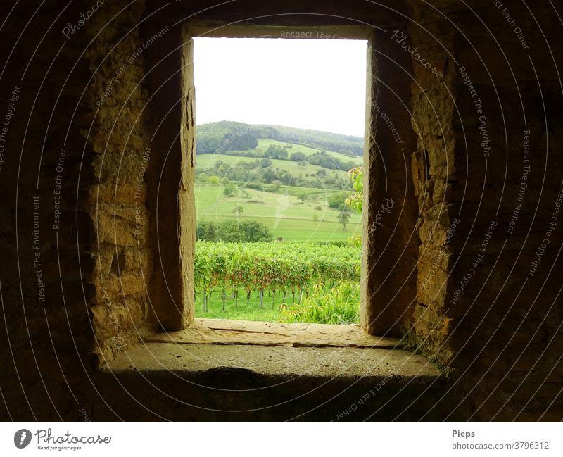 Fenster zum Wein Aussichtspunkt Weintrauben Weinstöcke markgräflerland wandern Ausflugsziel Reise Höhe Berge u. Gebirge breisgau Fensterblick Öffnung Mauer