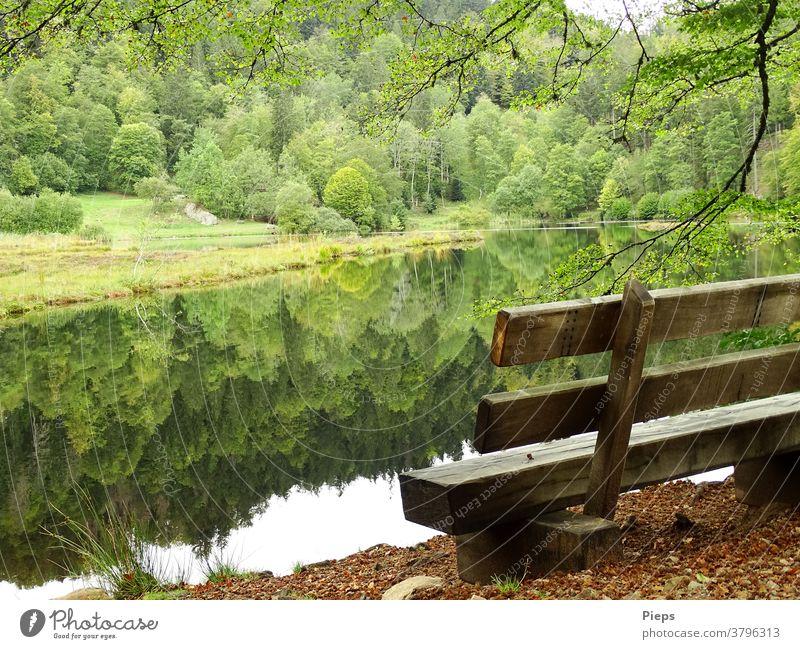 Am Weiher (1) Ruhe Schwarzwald Urlaub Wasseroberfläche Spiegelung im Wasser Naturschutzgebiet Bank Laubwald Erholung Herbst Auszeit Rastplatz Pause machen