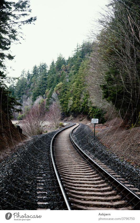 Eisenbahnschienen im Wald Gleise Zug Verkehr Transport reisen Bahnhof Bahnfahren Außenaufnahme fallen Stimmung Spuren grün grau dunkel braun