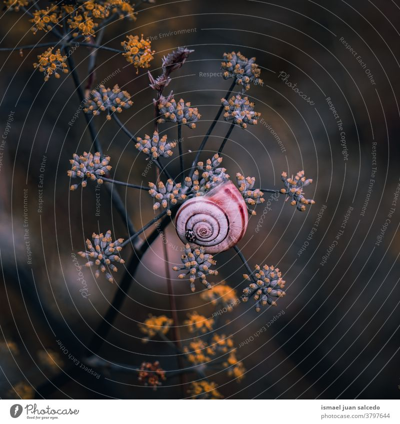 schöne braune Schnecke auf der Blüte im Herbst Riesenglanzschnecke Tier Wanze Insekt klein wenig Panzer Spirale Natur Pflanze Blume Garten im Freien