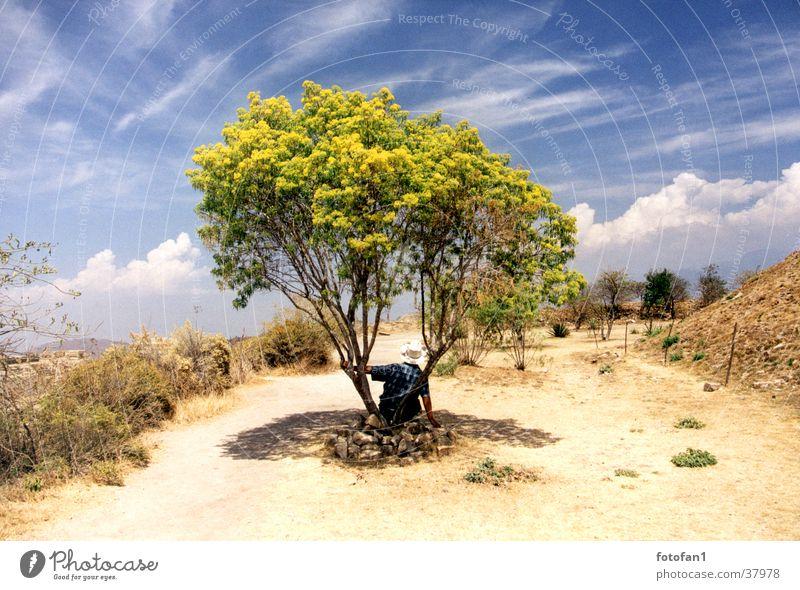 Siesta unterm Baum Pause Wolken Sträucher Dürre Monte Alban Sommer mann mit hut Hut Schatten schleierwolken Himmel Wege & Pfade Wüste Mexiko Oaxaca break tree