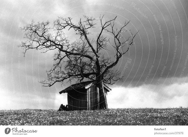 Hütte im Regen Baum Blume Wolken Wiese Tod Gras Regen Ast Hütte Scheune untergehen Geäst Allgäu Regenwolken