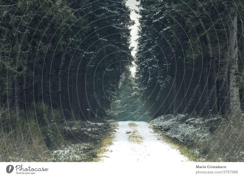 Frostbedeckter Wald während der Wintersaison Winterwald dunkel und launisch Winterstimmung Winterlandschaft geheimnisvoll Schnee Umwelt Wetter Menschenleer