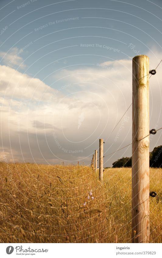 Grenzenlos? Natur Landschaft Pflanze Erde Luft Himmel Wolken Gewitterwolken Sommer Wetter Gras Wiese Feld Zaunpfahl Weide Draht Drahtzaun Holz Metall leuchten