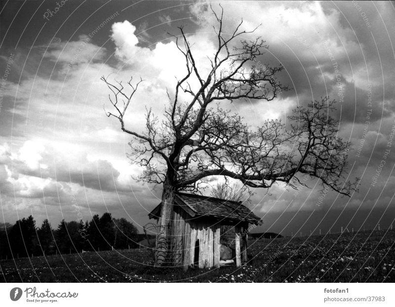 Hütte unter den Wolken Scheune Baum Allgäu Tod Kontrast cabin tree clouds heaven field grass flowers death forest