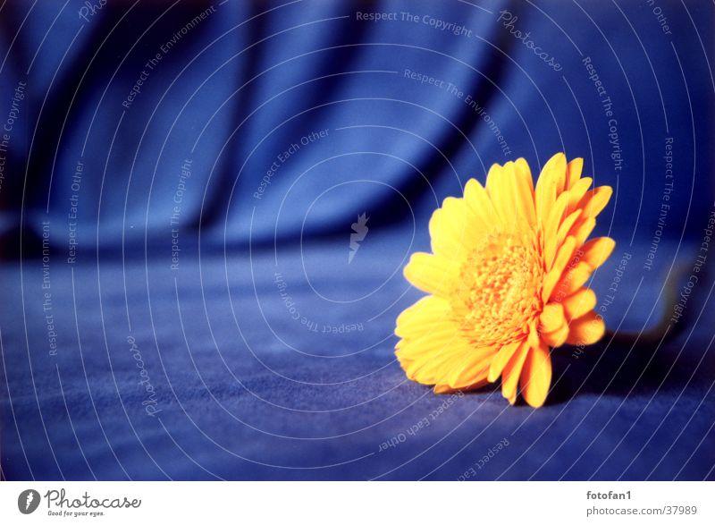 gelb auf blau 2 Blume Blüte Stoff analog