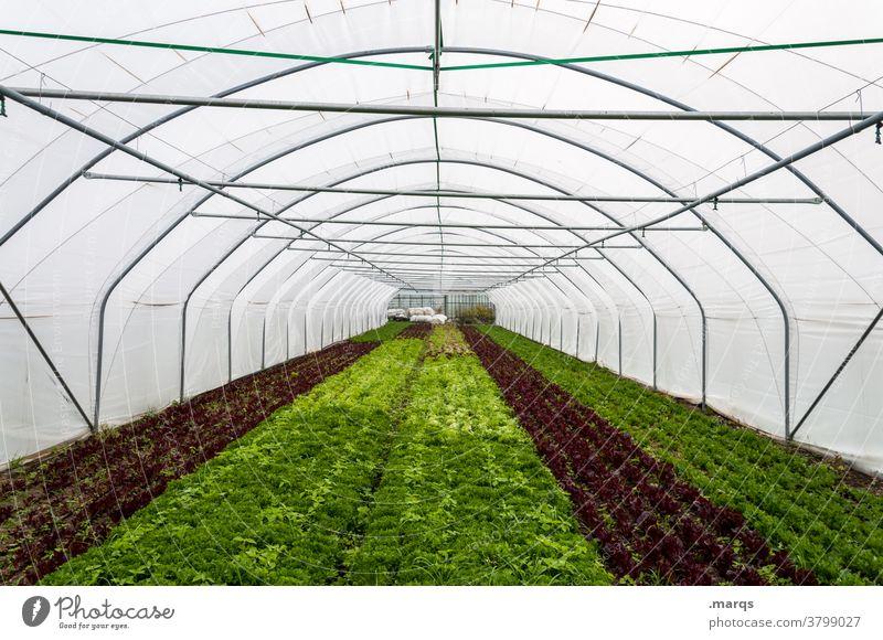 Gewächshaus Industrie Landwirtschaft Zentralperspektive Dach Kunststoff Perspektive Gärtnerei Nutzpflanze Feld Folie Folientunnel Tunnel
